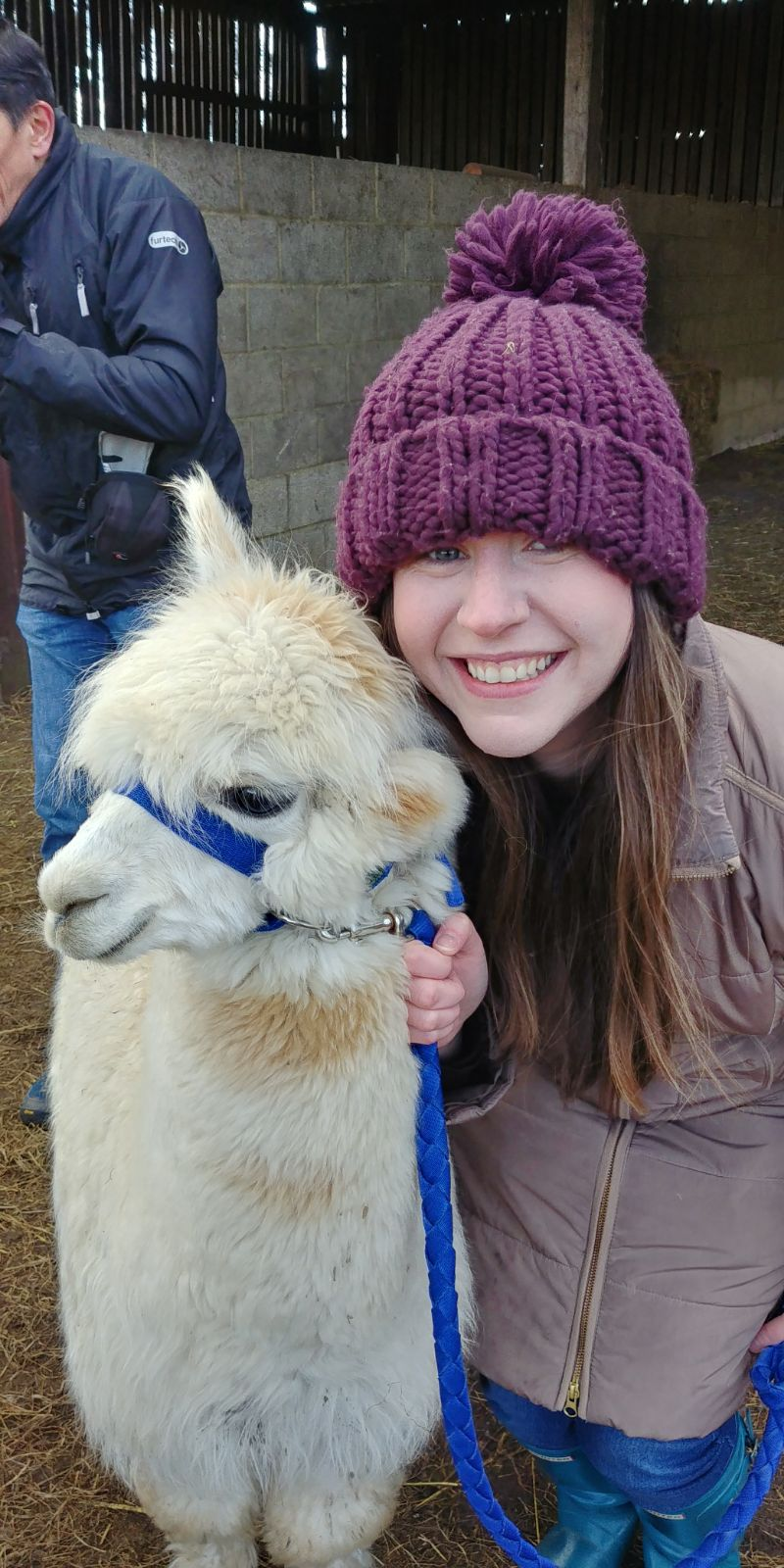 cheap day out with alpacas